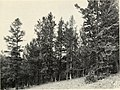 Biology of rust resistance in forest trees - proceedings of a NATO-IUFRO advanced study institute, August 17-24, 1969 (1221) (20196201089).jpg