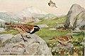 Bird-lore (1913) (14568878308).jpg