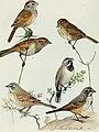 Bird-lore (1913) (14755208232).jpg