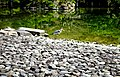 Bird In The Kyoto Imperial Palace Garden (31298963).jpeg