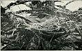 Bird notes (1913) (14563349870).jpg