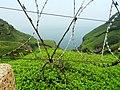 Bitou Cape 鼻頭角 - panoramio.jpg