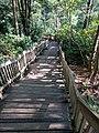 Blackwater Falls State Park WV 36.jpg