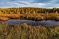 Blesner Creek Autumn Sunset - Fall Colors at Superior National Forest, Minnesota (36763922793).jpg