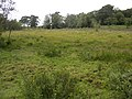 Bog south of Ferny Crofts, New Forest - geograph.org.uk - 35957.jpg