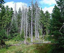 insectes nuisibles...conséquence du réchauffement.. 220px-Bog_spruce_forest