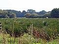 Boggy pasture with horses, Penlon, Blaenporth - geograph.org.uk - 967735.jpg