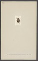 Bolboceras - Print - Iconographia Zoologica - Special Collections University of Amsterdam - UBAINV0274 001 05 0024.tif