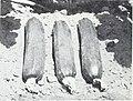 Bolgiano's spring 1970 (1970) (19768527394).jpg