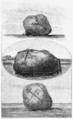 Book illustrations of Dvina or Boris stones - t.06.png