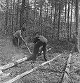 Bosbewerking, arbeiders, boomstammen, werkzaamheden, Bestanddeelnr 251-8478.jpg
