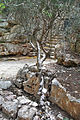 Botanic garden 13 achirote, hachores.jpg