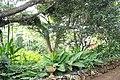 Botanical Gardens Kauai, Hawaii - panoramio (27).jpg