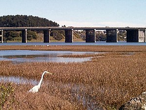 Bothin Marsh - A great egret in Bothin Marsh, with Richardson Bay Bridge in the background.