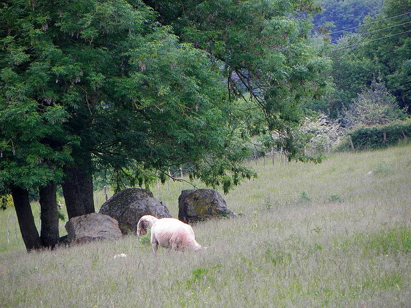 Dolmen ruiné de la Cahorie en Bouchamps-lès-Vraon (53).