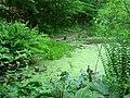 Bowman's Hill Wildflower Preserve - IMG 8279.JPG