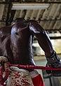 Boxer (34097177542).jpg