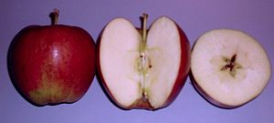 Braeburn - Braeburn apples, whole and sectioned.
