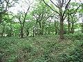Brayton Barff - geograph.org.uk - 13511.jpg