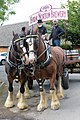 Brewer's Dray with Shire Horses (20331120694).jpg