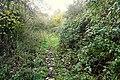 Bridleway from Farnborough - geograph.org.uk - 1591890.jpg
