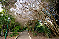 Brisbane City Botanic Gardens path.jpg