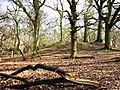 Bronze Age Barrow, Moneybury Hill - geograph.org.uk - 1185061.jpg