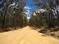 Brooman NSW 2538, Australia - panoramio (119).jpg