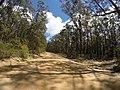 Brooman NSW 2538, Australia - panoramio (127).jpg