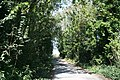 Buckland Ripers - geograph.org.uk - 559721.jpg