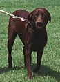 Buddy the Dog Walking on the South Lawn- 07-24-1998 (6461537945).jpg