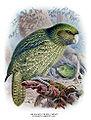 Buller Kakapo.jpg