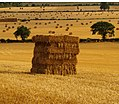 Burford, Oxfordshire, August 2006 harvest, stubble fields and straw bales 2.jpg