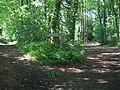 Burrswood - geograph.org.uk - 179772.jpg