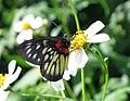 Butterfly & flower.jpg