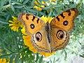 Butterfly - 3.jpeg