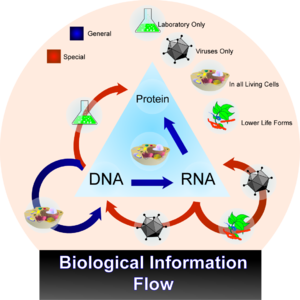 Flow of information in biological systems