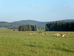 Upper Palatine Forest - Image: CHKO Český les (CZE) typical landscape
