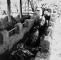 COLLECTIE TROPENMUSEUM Runderen worden door een bak met chemicalien geleid ter bescherming tegen uitwendige parasieten Uasin Gishu District TMnr 20014515.jpg