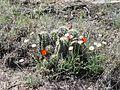 Cactus and Flowers (9504523524).jpg