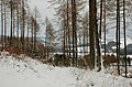 Cademuir Forest under snow - geograph.org.uk - 1633428.jpg
