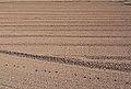 Camí de Vera, camp llaurat amb petjades.JPG