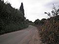Camí del Roquís.jpg