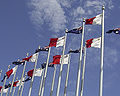 Canberra - Maltese Flags.jpg