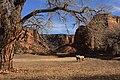 Canyon de Chelly National Monument - horses.jpg
