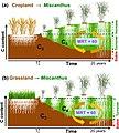 Carbon storage under Miscanthus x giganteus plantations.jpg