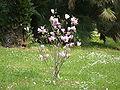 Caserta-reggia-15-4-05 189.jpg