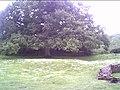 Castle Rising Castle Grounds - geograph.org.uk - 16508.jpg