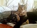 Cat friends hugging.jpg