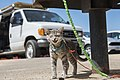 Cat on a Leash at Quail Springs Picnic Area (33494784978).jpg